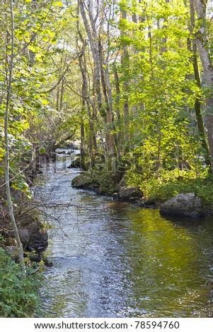 The river winds its way in the forest landscape - stock photo