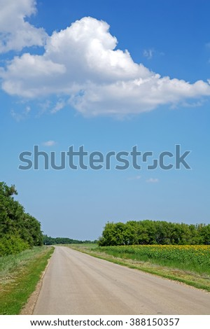 the road along the field of sunflowers - stock photo