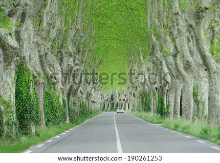 The road between trees - stock photo