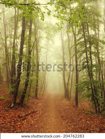 The road in the misty forest - stock photo