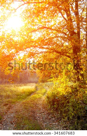 The road in the oak woods in autumn. Dirt road in a mixed forest on a sunny evening. Beautiful Fall scene on curved unpaved road with colorful leaves on trees and in the road - stock photo