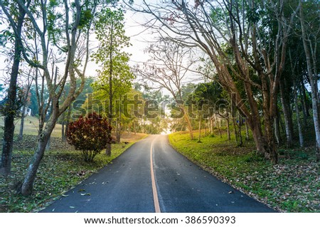 The road into the forest - stock photo