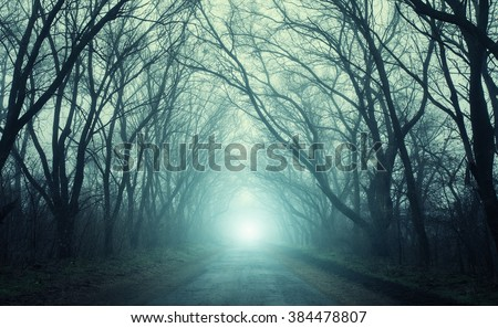 The road passing through scary mysterious forest with green  light in fog in autumn. Magic trees. Nature misty landscape - stock photo