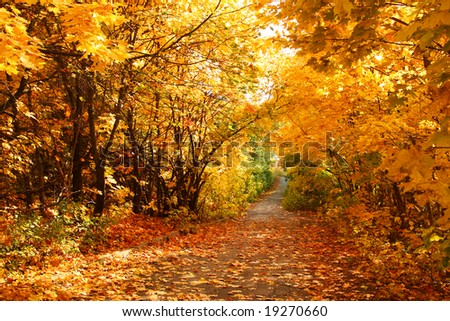 The road through the autumnal park. Yellow trees. - stock photo
