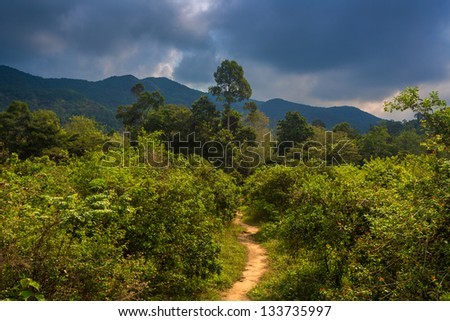 The road to the jungle - stock photo