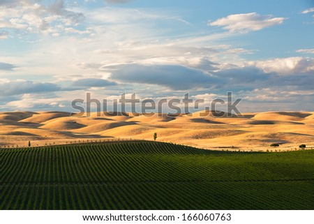 The rolling hills of Dunnigan, California as the sun begins to set for the evening.  - stock photo