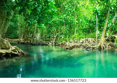 The root and crystal stream. freshwater meets with seawater from the mangrove forest, Krabi, Thailand - stock photo