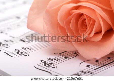 The rose lays on a musical paper - stock photo