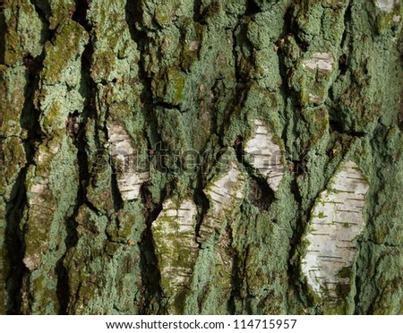 The rough surface of an old tree - stock photo