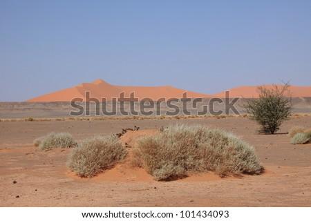 the sahara - stock photo