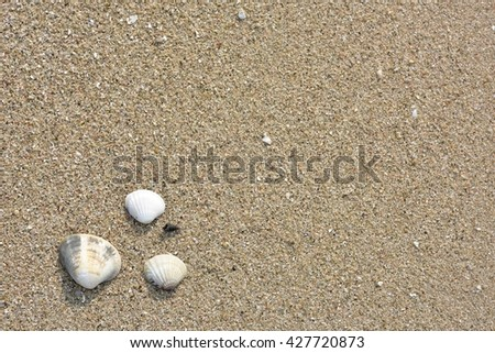 the sandy beach and dead shells with morning lighting - stock photo
