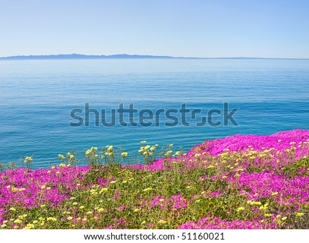 The Santa Barbara channel with purple ice plant flowers in the foreground. - stock photo