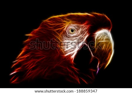 The Scarlet Macaw  is a large, colorful macaw. It is native to humid evergreen forests in the American tropics. Range extends from extreme south-eastern Mexico to Amazonian Peru, Bolivia and Brazil - stock photo