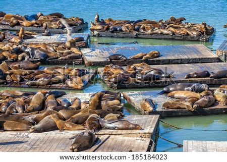 The Sea Lions of Pier 39 in San Francisco - stock photo