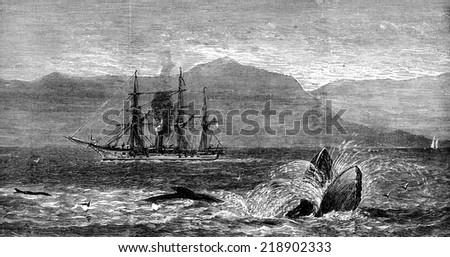 The sea serpent, vintage engraved illustration. Journal des Voyages, Travel Journal, (1879-80). - stock photo