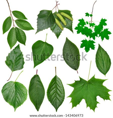 The set of leaves is isolated on a white background - stock photo