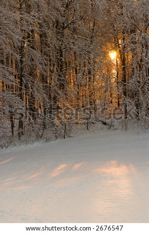 The setting sun filters through the forest onto a field of new fallen snow.  Ice and snow on the bare tree branches appear bejeweled by the sunshine. - stock photo