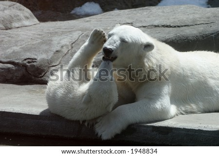 The she-bear and the bear cub play - stock photo