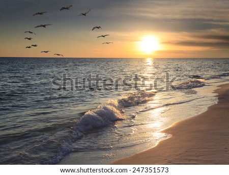 The Silhouette of a Large Flock of Pelicans Fly Over Ocean as Sun Sets  - stock photo