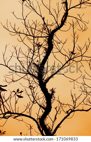 The silhouette of branch on the mountain in Thailand - stock photo