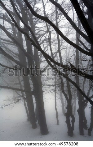 the silhouettes of trees in the mist, italy - stock photo