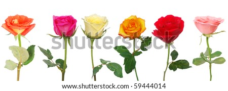 the six natural roses - stock photo