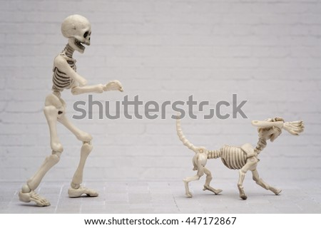 The skeleton chasing the dog for his arm - stock photo