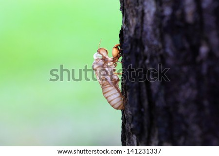 the skin of cicada in park - stock photo