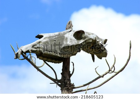 The skull of a horse on a property in Cotacachi, Ecuador - stock photo