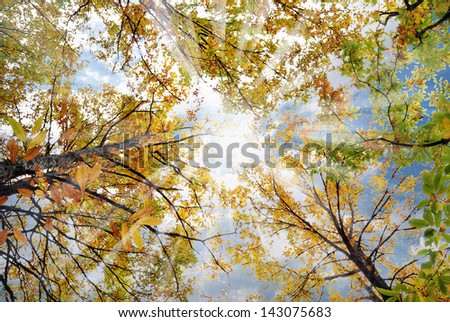the sky as seen from under the trees - stock photo