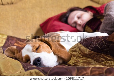The sleeping woman and its dog , focus on a dog. - stock photo