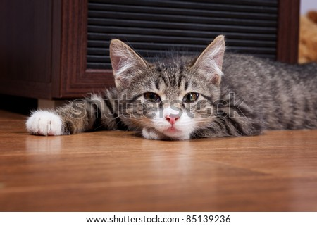 The sleepy kitten lies on wooden to a floor - stock photo