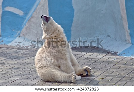 The small polar bear sits on a floor and sing song - stock photo