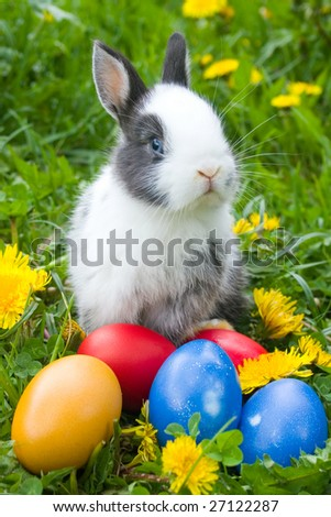 The small rabbit and colourful easter eggs in a grass - stock photo