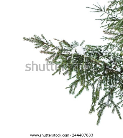 The snow-covered branch of a fir-tree isolated on white snow - stock photo