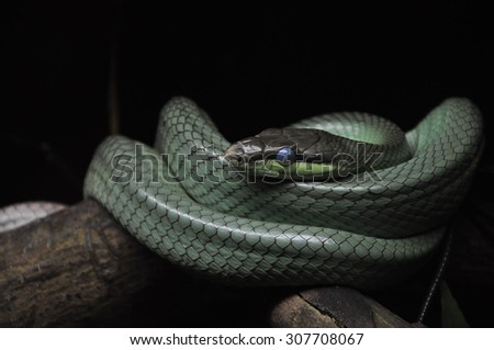 The soul piercing eyes of a snake will haunt you - stock photo