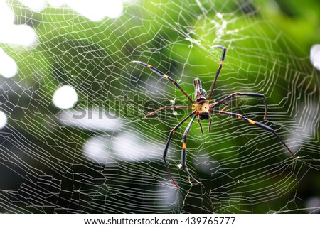 The spider in the garden.  - stock photo
