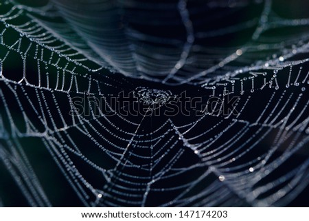 The Spider Web closeup in a darkness - stock photo