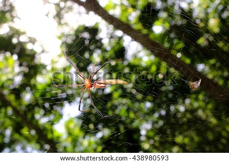 The spider with the insects in the garden.  - stock photo