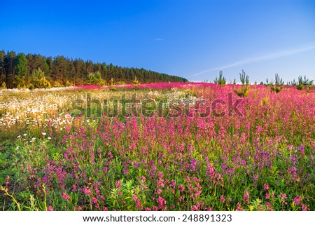 the spring  landscape with  flowers on a meadow  - stock photo