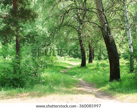 The spring wood at sunrise - imitation of drawing. The beautiful green wood with a footpath. The wood in the early spring and a footpath between trees, a sunlight - imitation of drawing. - stock photo