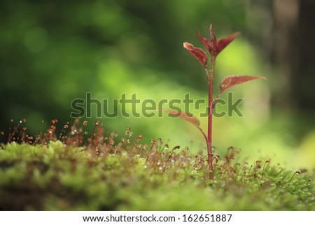 The sprout of moss and a cherry tree - stock photo