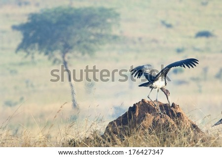The stork of the marabou costs on a termitary in a smoke of a fire of savanna. Marabou. Leptoptilos crumeniferus - stock photo