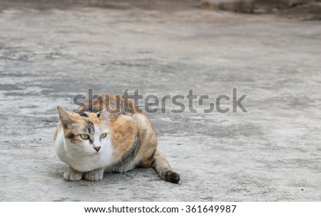The stray cat sitting on the  road surface. - stock photo