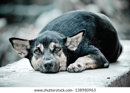 The stray dog resting on concrete wall - stock photo