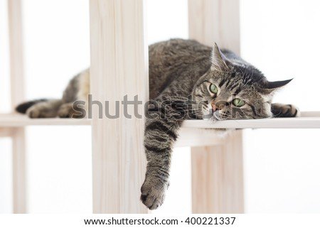 The striped cat lies on the shelf and falls asleep - stock photo