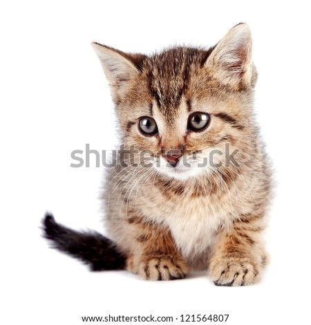 The striped kitten on a white background - stock photo