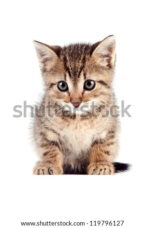 The striped kitten sits on a white background - stock photo