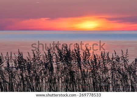 The sun rise over Lake Michigan silhouetting wild grasses on the shore of Door County, Wisconsin's Cana Island. - stock photo