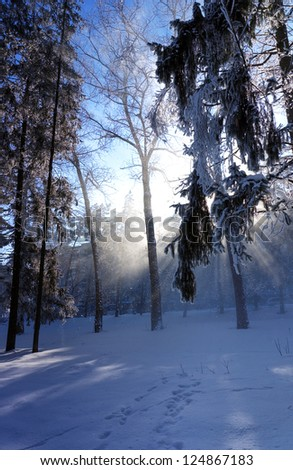 The sun's rays passing through the falling snow and tree branches. Winter park in snow and frost on a sunny day - stock photo